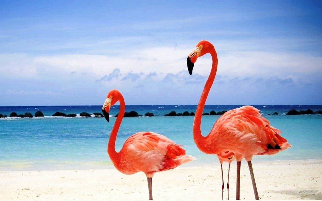 Red Flamingos on a Maldives Beach