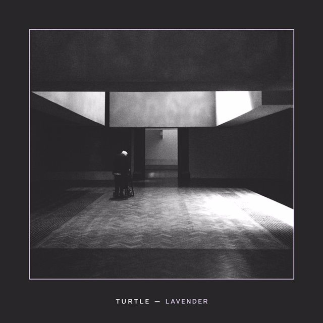 Turtle_Lavender_HiRes1500