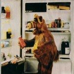 alf-fridge1