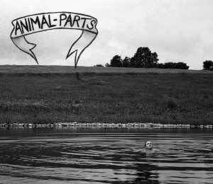 animal parts