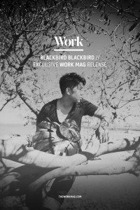 Blackbird Blackbird - the Work Mag
